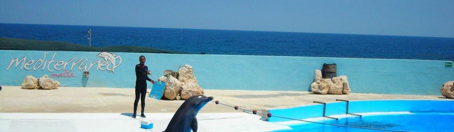 Mediterraneo_dolphin_show_1