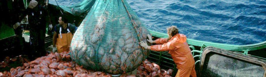 overfishing-overview-08022012-WEB_109842