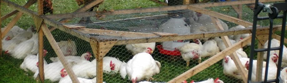 Pastured+Poultry