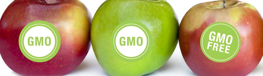 GMO-laoch