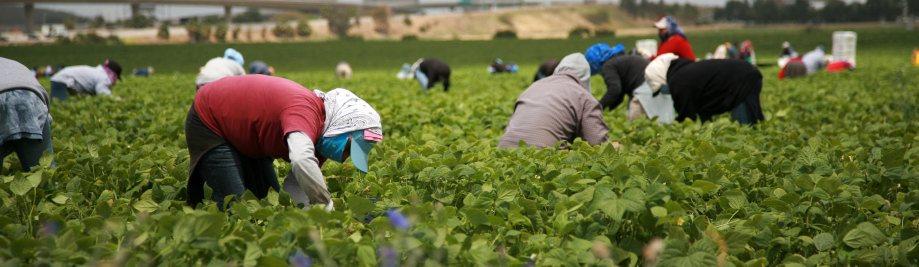 migrerende-plaaswerkers